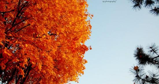 L'automne de l'être humain