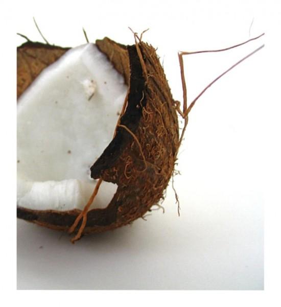 Beauté et noix de coco